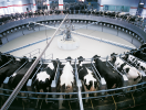 GEA - 24-7 Milking with a Rotary Milking System